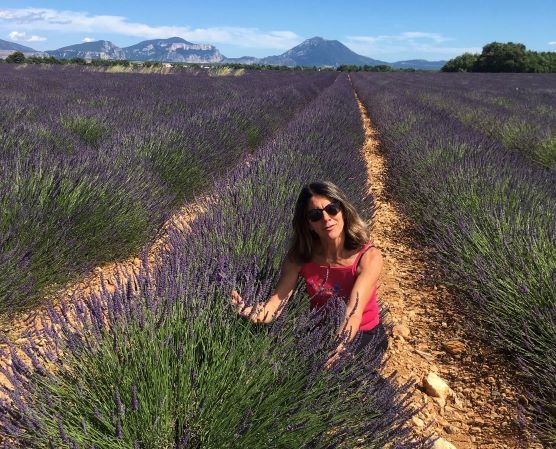fields-of-lavender-of-valensole